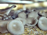 Kolindros Mushrooms | About Us