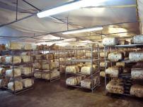 Παραγωγή μανιταριών