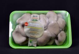Fresh pleurotus mushrooms 500gr