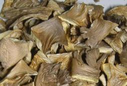 Dried pleurotus mushrooms